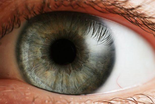 El ojo con lente es el sistema de visión más evolucionado