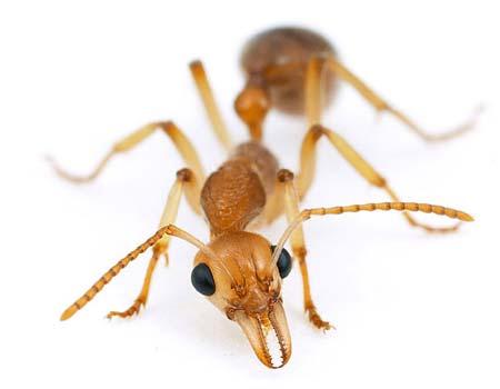 Los insectos son seres evolutivamente perfectos