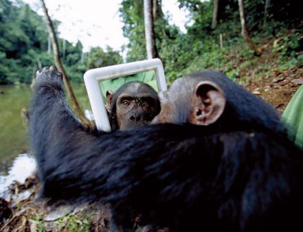 Resultado de imagen para imagenes mono frente al espejo