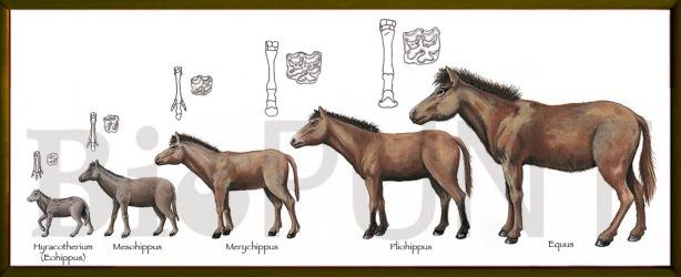 5 cavalls.evolc-marco