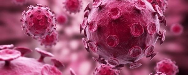 Schmallenberg-bacteria+virus+-+cerise