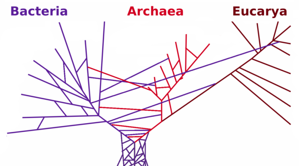 PhylogeneticTree_horizontal_transfers