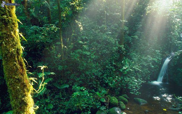 selva-tropical,-rayos-de-sol,-riachuelo-193803