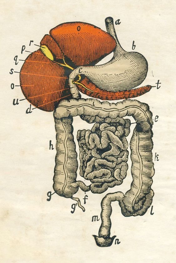 ilustracion-medica-1860